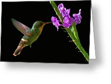 Tufted Coquette Greeting Card