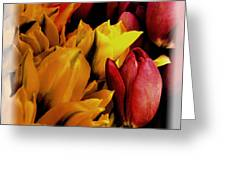 Tulips  Greeting Card by David Patterson