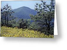143419-turk Mountain Overlook  Greeting Card