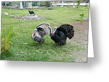 Turkeys In The Yard At Laguna Guerrero Greeting Card