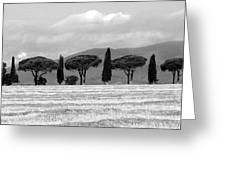 Tuscany Trees Greeting Card by Julian Perry