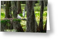 Two Baby Great Egrets And Nest Greeting Card
