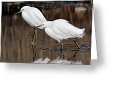 Two Snowy Egrets Greeting Card