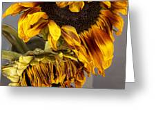 Two Sunflowers Tournesols Greeting Card