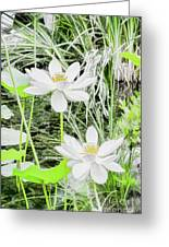 Two Water-lilies Greeting Card