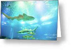 Undersea Shark Background Greeting Card