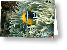 Underwater Close-up Greeting Card