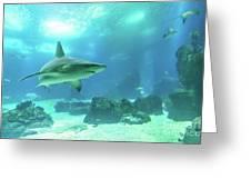 Underwater White Shark Greeting Card