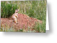 Utah Prairie Dog Greeting Card