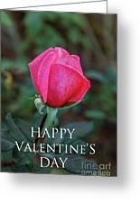 Valentine Rose Greeting Card