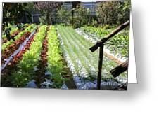 Vegetable Garden  Greeting Card