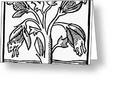 Vegetable Lamb Myth Greeting Card