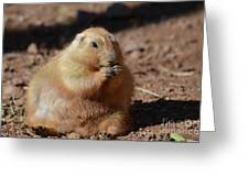 Very Large Overweight Prairie Dog Sitting In Dirt Greeting Card