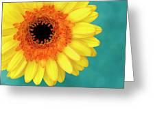 Vibrance Greeting Card