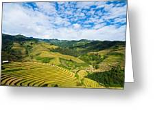Vietnam Rice Terraces Greeting Card
