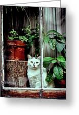 Village Cat Greeting Card