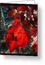 Vine Leaf At Fall Greeting Card
