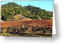 Vineyard 3 Greeting Card