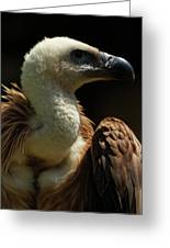 Vulture. Gyps Fulvus Greeting Card