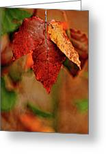 Waiting For Fall Greeting Card