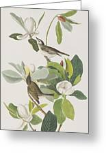 Warbling Flycatcher Greeting Card