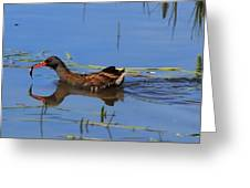 Water Rail With Fish Greeting Card