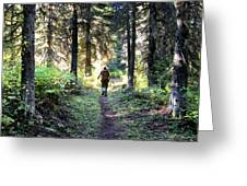 Waterton Valley Trail Detail - Glacier National Park Greeting Card