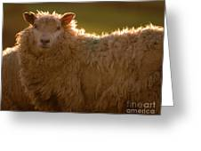 Welsh Lamb In Sunny Sauce Greeting Card