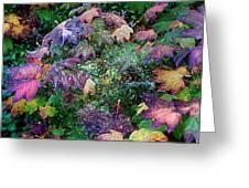 Wet Washington Autumn Fantasy 1 Greeting Card