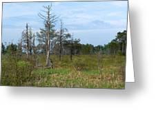Wetland Greeting Card