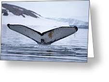 Whale Tail Greeting Card