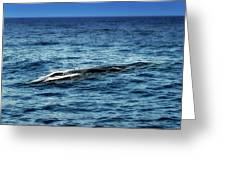 Whale Watching Balenottera Comune 3 Greeting Card
