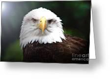 Where Eagles Dare 4 Greeting Card
