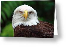 Where Eagles Dare Greeting Card