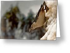 White Breasted Nuthatch In The Snow Greeting Card