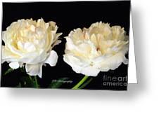 Peonies In Cream Greeting Card