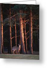 White-tail Deer Greeting Card