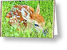 White-tailed. Virginia Deer Fawn Greeting Card