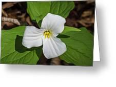 White Trillium 3 Greeting Card