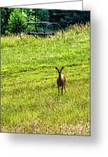 Whitetail Deer And Hay Rake Greeting Card