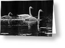 Whooper Swan Family Greeting Card