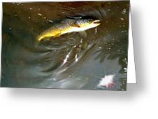 Wild Brown Trout Greeting Card