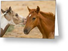 Wild Colts Greeting Card