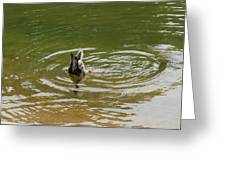 Wild Duck Greeting Card
