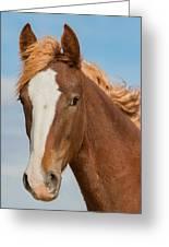 Wild Foal Greeting Card