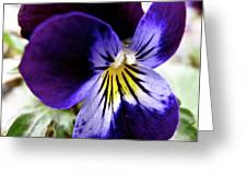 Wild Ground Flowers Greeting Card