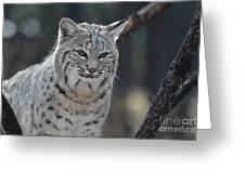 Wild Lynx Cat Greeting Card