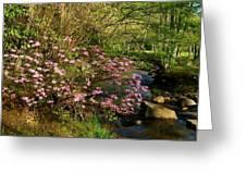 Wild Piedmont Azalea Greeting Card