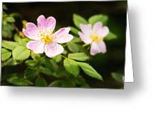 Wild Pink Eglantine Greeting Card