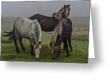 Wild Ponies On The Preseli Mountains Pembrokeshire Greeting Card